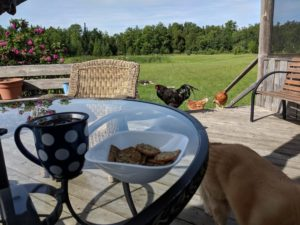 image of tea cup with loose leaf tea, bowl of crackers in outdoor country scene with the neighbour's chickens